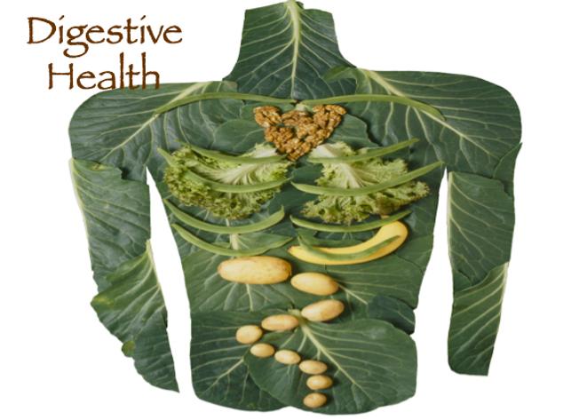Digestive Health.png