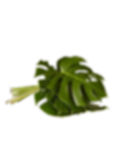 monstera-leaves-stems-the-sill.png