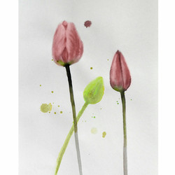 Tulips – ink washes