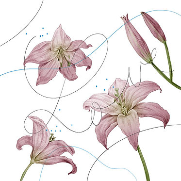 Greeting card, 3 pieces  – Lilies