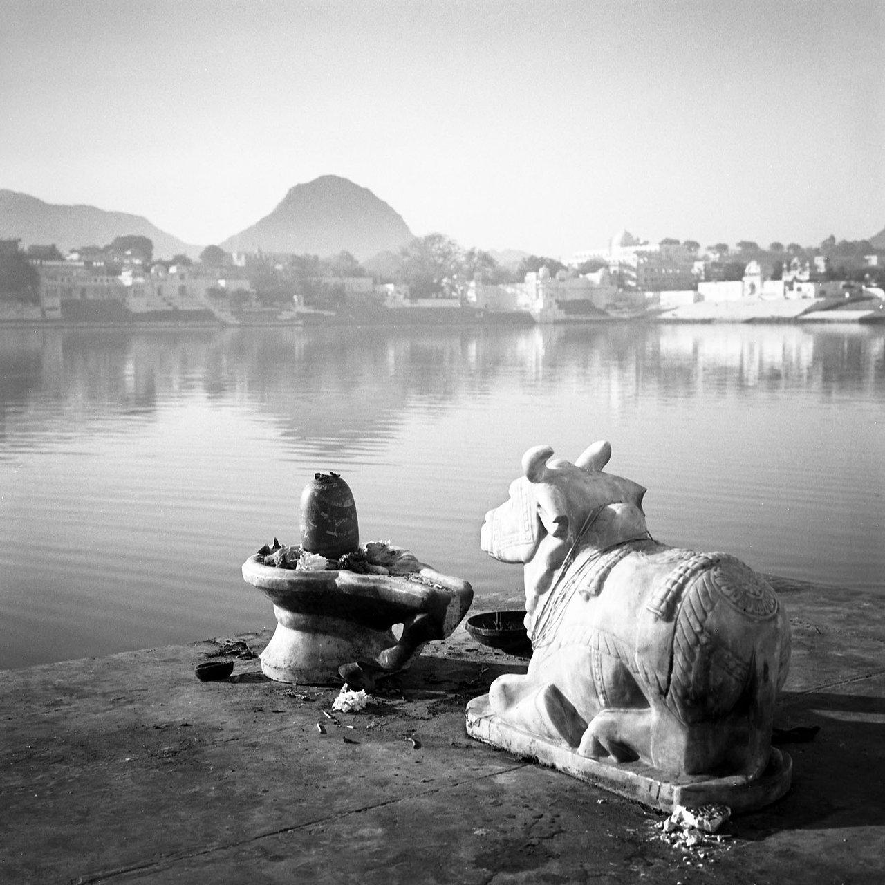 Nandi, Rajasthan