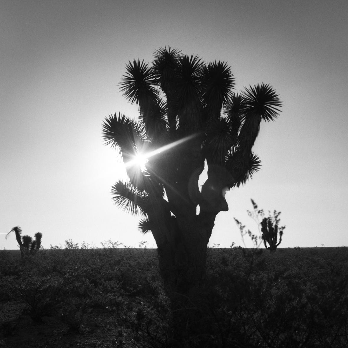 Wirikuta desert