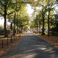 orangerie-darmstadt-einfahrt.JPG