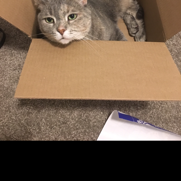 Sable loves boxes
