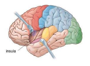Insular-cortex image.jpg