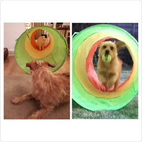 Doggie fun and games:  Ideas to keep your dog stimulated while at home
