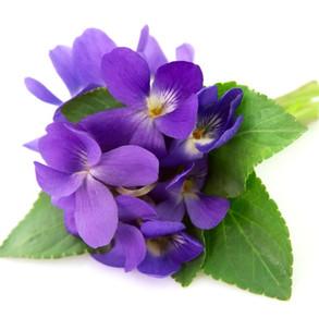 Calming Herbs for Pets 2 – Sweet Violet Leaf