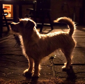 Keeping Your Pets Calm & Safe During Fireworks