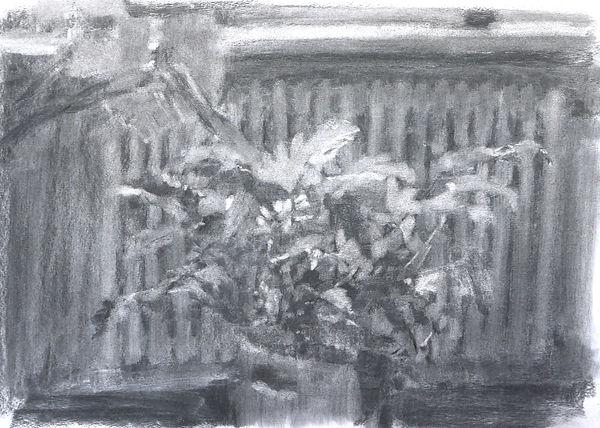 Kjersti Foyn - Plante