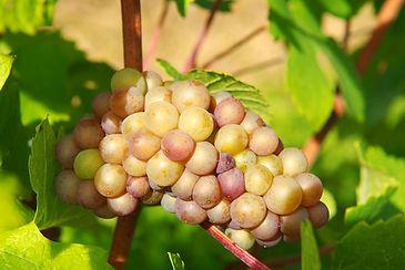 Terroirviner, vin på nätet direkt från Colmar