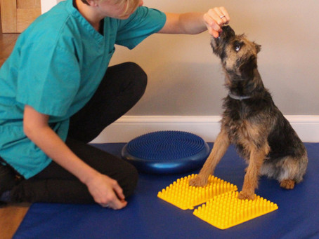 The benefits of passive range of motion (PROM) exercise straight after stifle surgery in canine