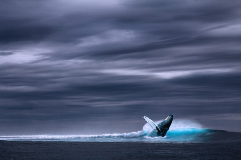 הלוויתן
