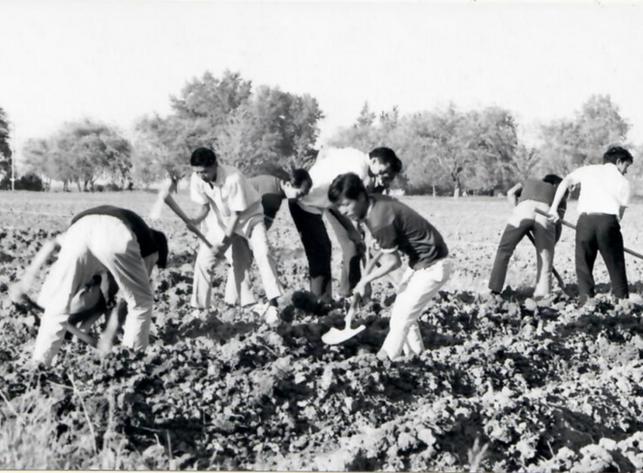 First Tibetans in Quebec building a community garden.