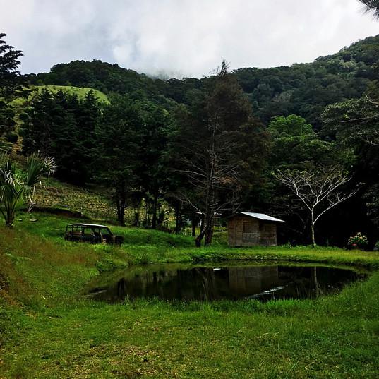 Campsite, High in the Jungle