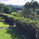 The Grounds of Hacienda La Amistad