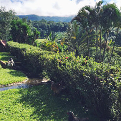 The Grounds of Hacienda La Amistad