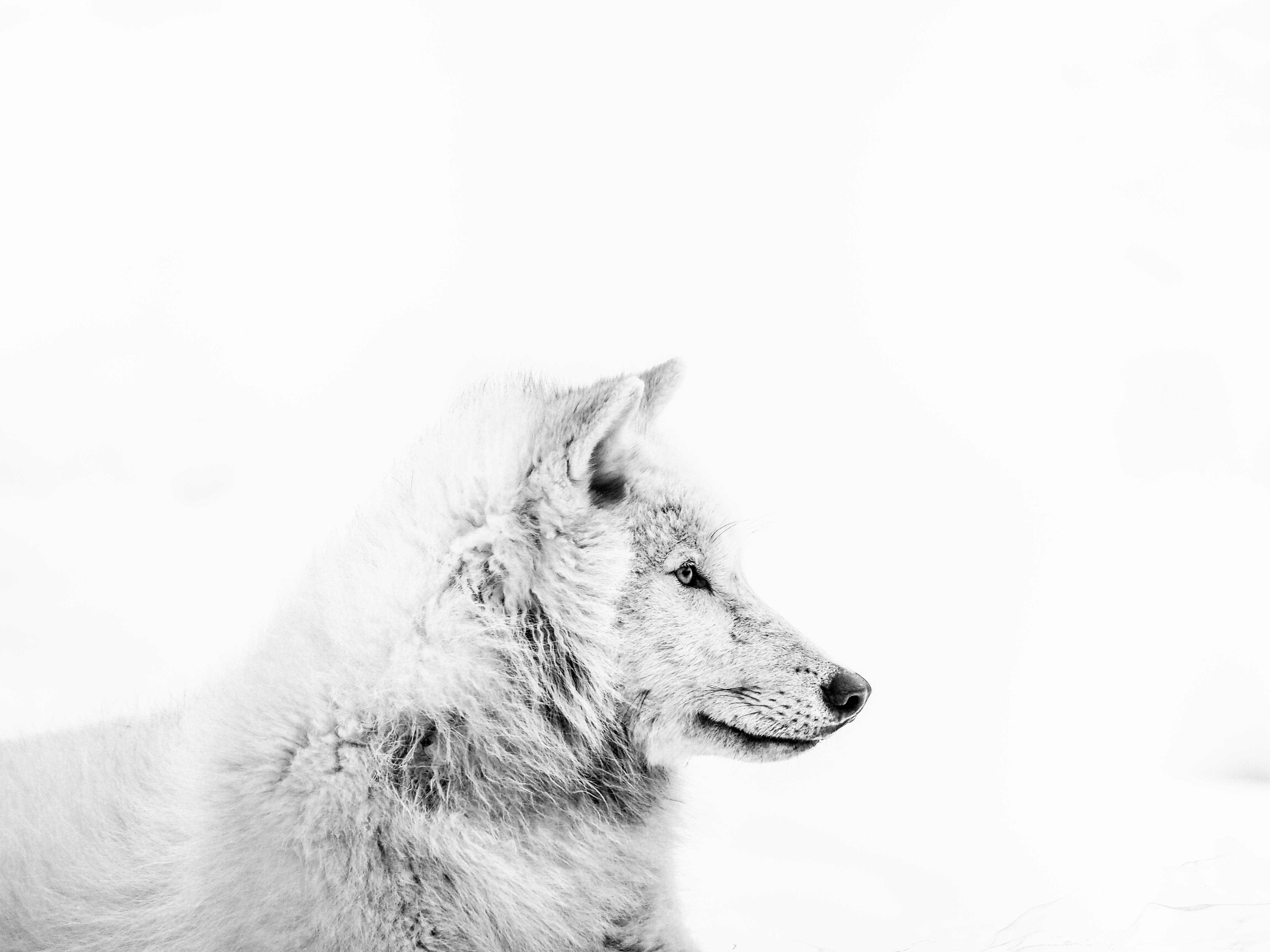 Loup_IMG_046_Hope