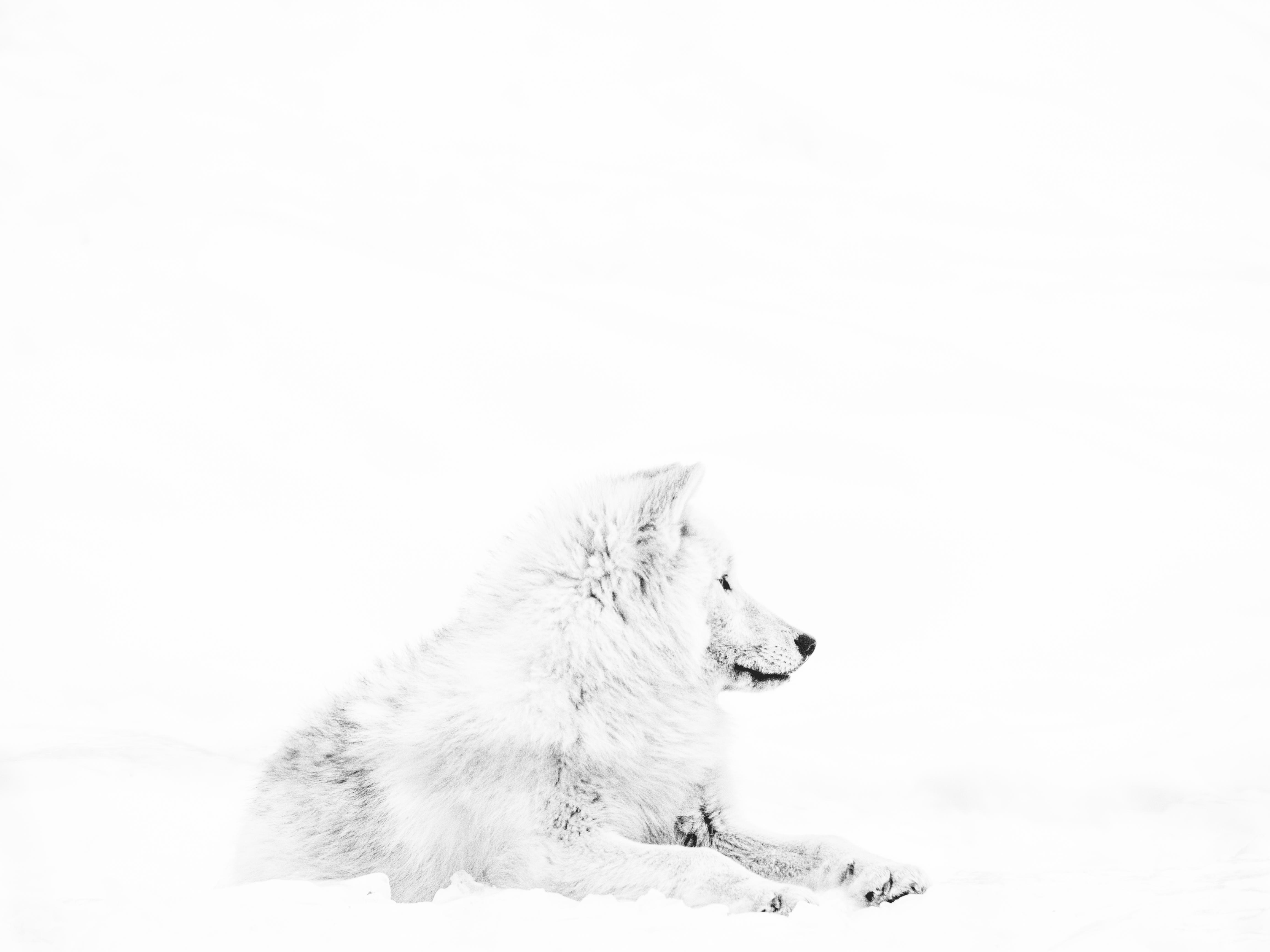 Loup_IMG_007_Hope