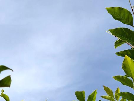 【JCの空がキレイだね。】