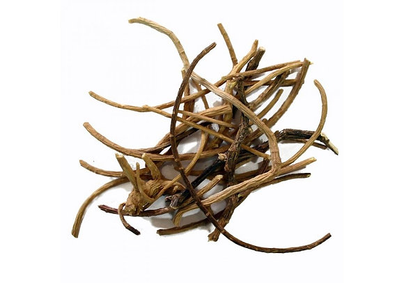 African dream roots (Silene capensis)