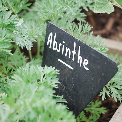 Absinthe commune AB (Artemisia absinthium)