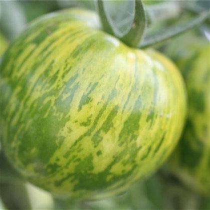 Tomate Green Zebra AB