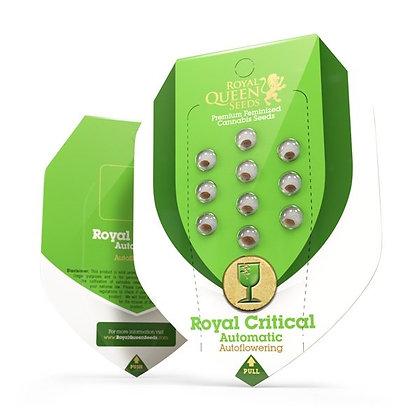 Royal queen seeds - Royal critical