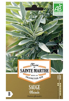 graines de Sauge officinale Bio (Salvia officinalis)