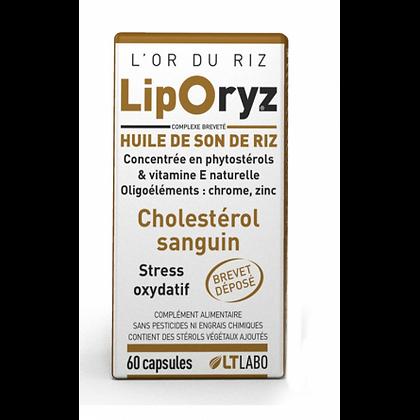 Liporiz / Cholestérol sanguin / Stress oxydatif / No statines