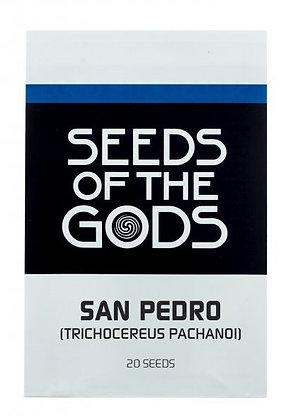 Graines de San Pedro