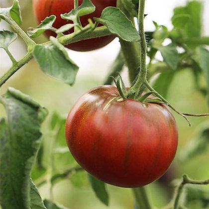 Tomate noire de Crimée AB