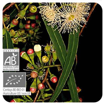 HE Bio Eucalyptus radié 10ml
