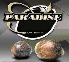 White berry de Paradise seeds