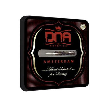 DNA genetics - Kushberry