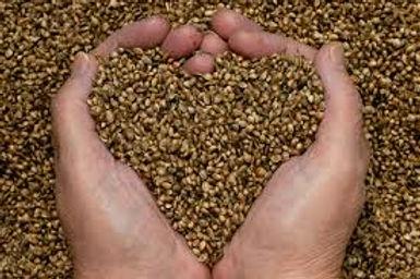 Graines biologiques à semer, à faire germer ou à croquer : chez Grainies et Plaisirs il y en a pour tous les goûts...Graines&plaisirs : vente de graines, huiles, farines, germoirs...à Rennes et à Morlaix.