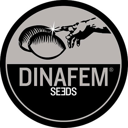 Strawberry Amnesia - Dinafem Seeds
