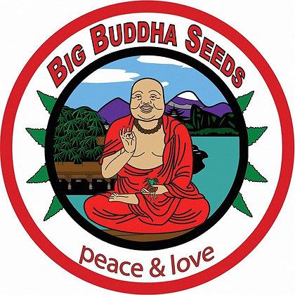 Cookies and Cream Cheese - Big Buddha Seeds