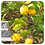 Thumbnail: HE Bio de Citronnier 10ml