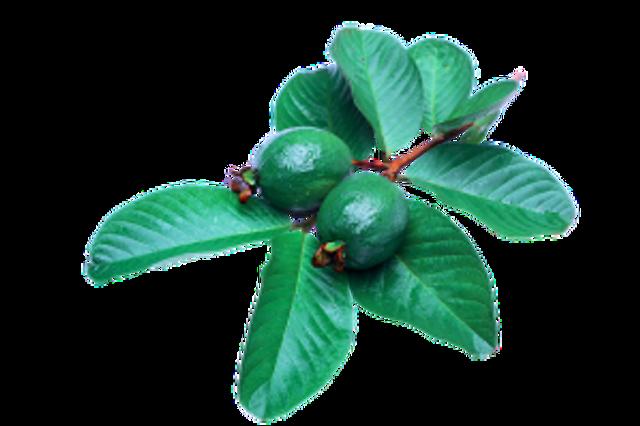 guava-2822182_640