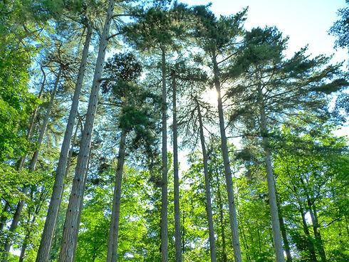 Image arbres flyers.jpg