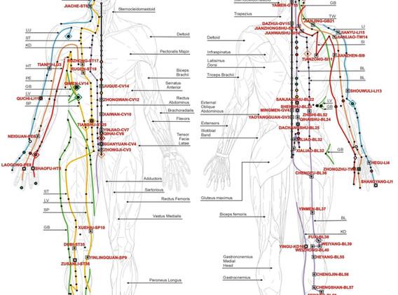 Chinese_meridians_2.jpg