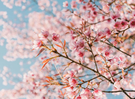 Spring and Chinese Medicine