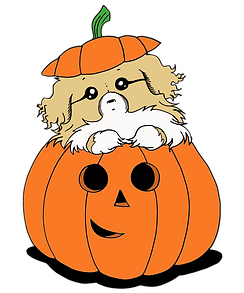 Pumpkin Tibbie - Sable - Transparent Bac