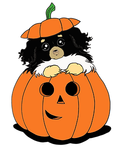 Pumpkin Tibbie - Black and Tan - Transpa