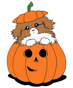 Pumpkin Tibbie - Brown and White Parti -