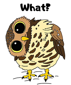 What - Transparent Background.png