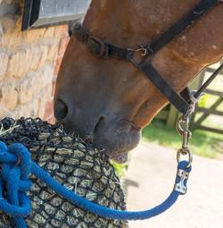 Horse_feeding_trickle_net_s