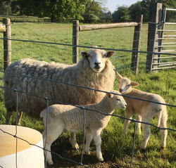 advert lamb slider