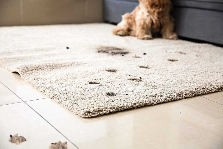 how-to-get-dirt-stains-out-of-carpet-ste