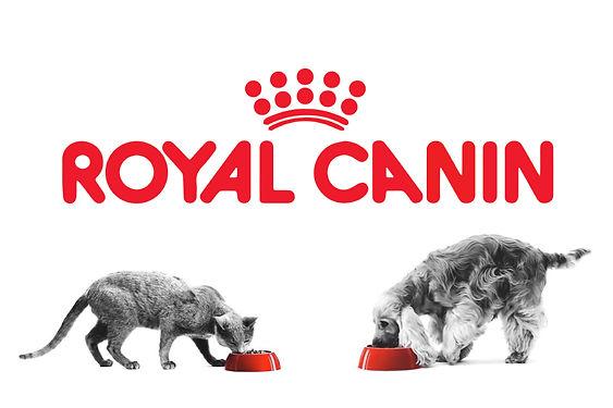 122719_Royal-Canin-Mayabb_Lead.jpg